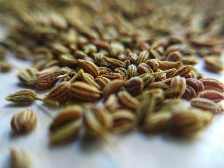 Best Caraway Seeds Substitutes
